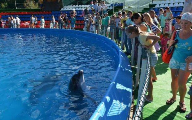 Киевская полиция обыскивает дельфинов