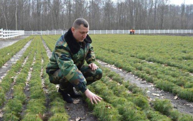 День работника леса: хранители украинской природы отмечают профессиональный праздник