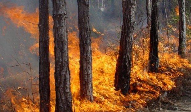 На Киевщине объявлен высокий уровень пожарной опасности