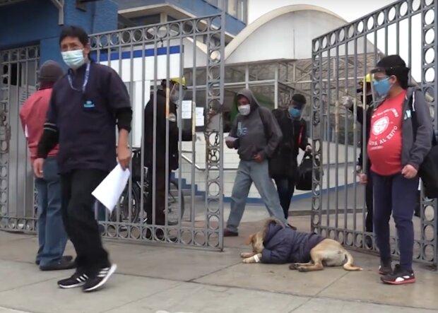 Пес цілодобово чекає хворого на ковід господаря під дверима лікарні: зворушлива історія сучасного Хатіко