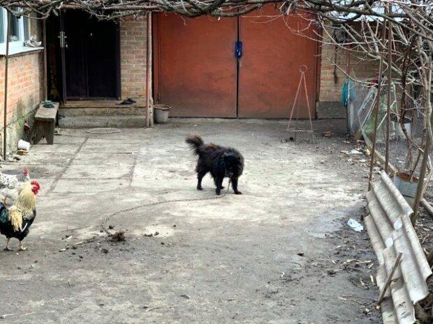 Журналісти знайшли собаку, якого пропонував продати Брагар