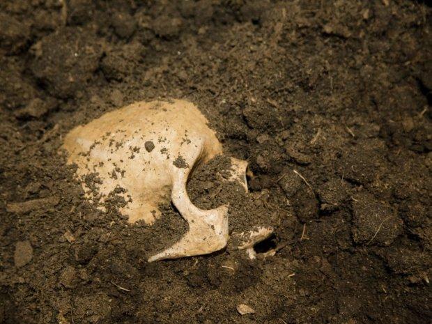 Вухо серфера: незвичайні черепи розкрили вченим таємницю стародавніх пірнальників