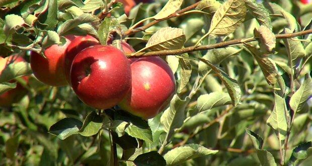 Простые правила для успешной посадки дерева: как не навредить растению и остаться довольным