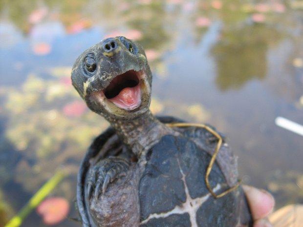 Как такое возможно: огромная черепаха оккупировала причиндалы британки, слабонервным не смотреть