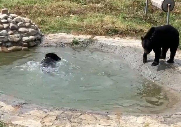 """Под Львовом поселились медведи, вызволенные из """"зоопарка смерти"""" - просят рыбы и меда"""