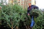 Найпотворніша ялинка України зводить соцмережі з глузду: вбивця новорічного настрою