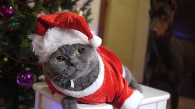 Найкращі меми на 27 грудня: кашляючий кіт та вечірка у светрах