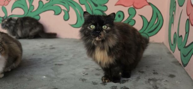 Кіт, фото: скріншот з відео