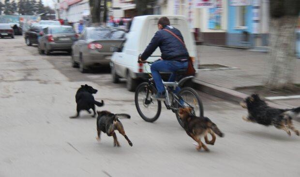 Собаки, фото Гривня