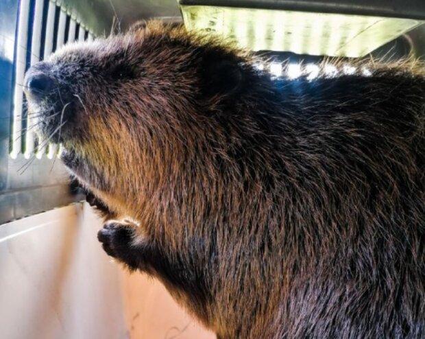 Фото: Служба порятунку тварин