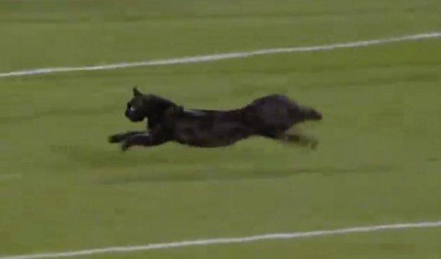 Кот едва не сорвал футбольный матч в Голландии (видео)