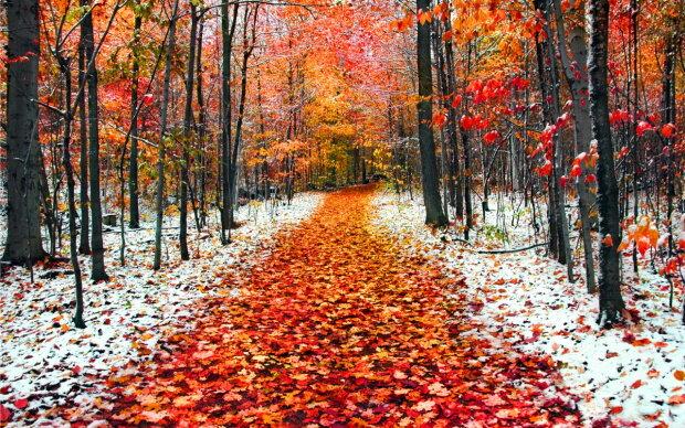 Погода на 8 жовтня: на українців чекає морозне сонце