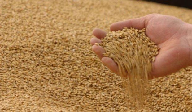 Аграрний фонд збирається закупити 400 тисяч тонн зерна