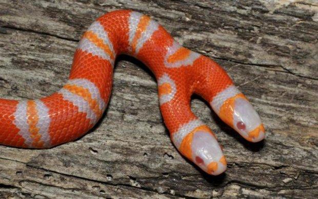 Очевидці зняли жорстоку битву двох голів однієї змії