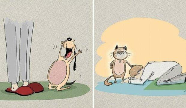 Головні відмінності котів та собак (фото)