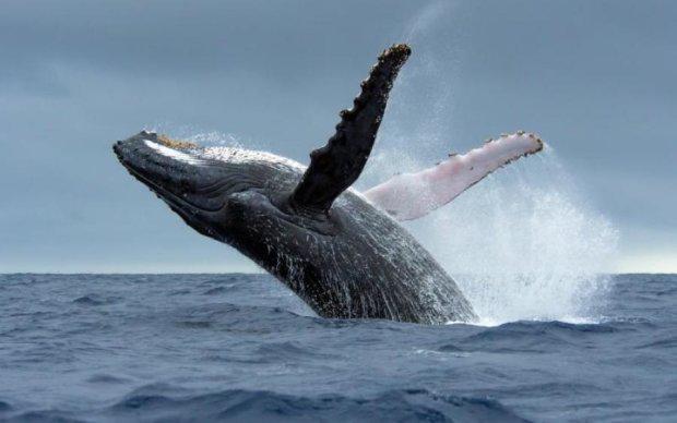 Всесвітній день китів і дельфінів 23 липня: цікаві факти про тварин