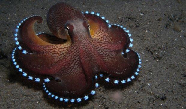 Восьминоги можуть бачити із заплющеними очима