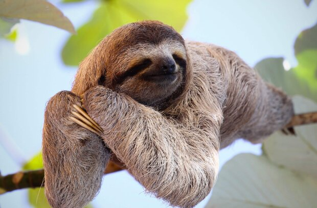 Лінивець, фото з відкритих джерел