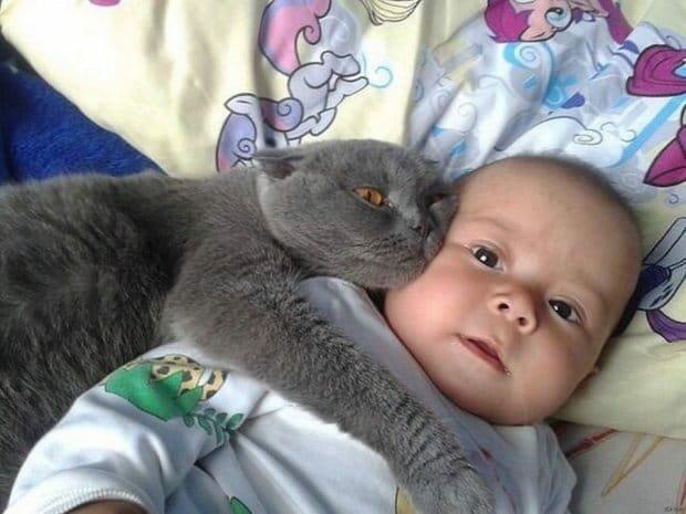 Кот с младенцем, фото: Прикарпатье Online