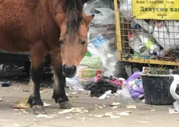 Пони возле мусорки в Броварах, фото Kyiv News: Telegram