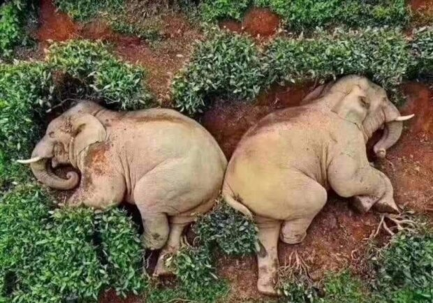 Симпатичні слони