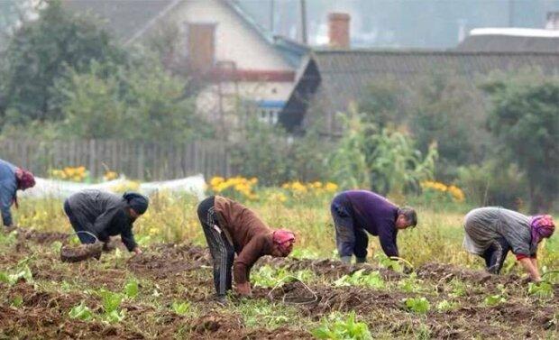 жанки работают на огороде, иллюстративное фото из свободных источников