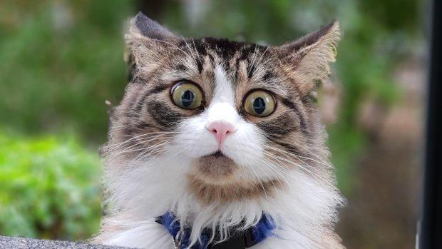 Лучшие мемы на 23 декабря: кот в витрине и эффект домино