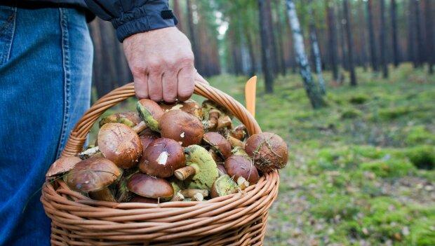 Грибний сезон в Україні: як відрізнити їстівні від отруйних та приготувати смачні страви з дарів лісу