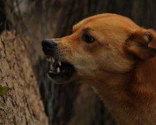 У Харкові господар нацькував пса на перехожих, фото: Експрес