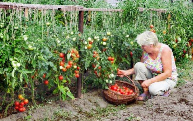Економія та користь: у скільки українцям обійдуться овочі з грядки