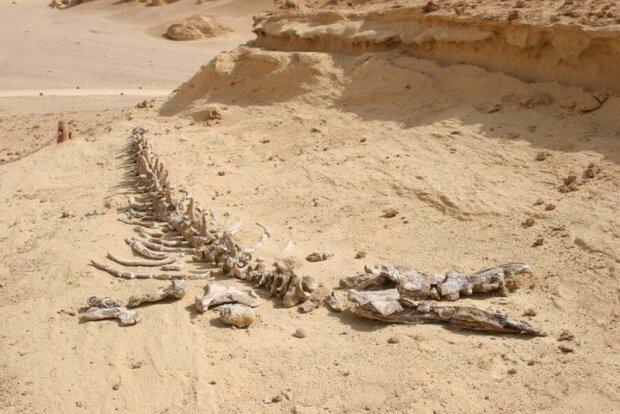 Миру показали Долину китів у Сахарі, де 40 млн років тому жили прадавні гіганти