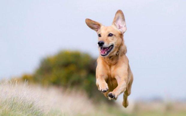 Копи заарештували пса-пустуна: дуже миле фото