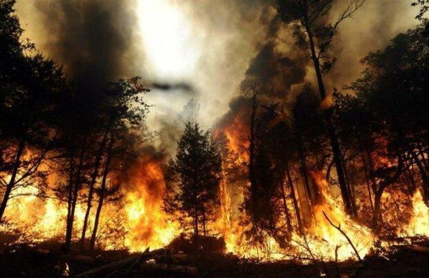 Не ображайте жінок: відчайдушна українка підпалила чорнобильський ліс, причина вражає