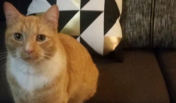 В Австралии появился кот-вор по имени Ниндзя