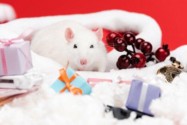 Рік Білого Сталевого Щура: як і де зустріти новорічні свята
