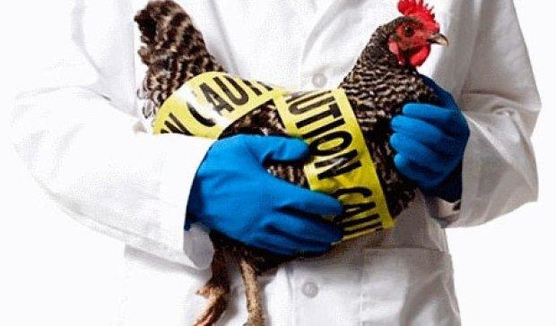 В штаті Айові ввели надзвичайний стан через спалах пташиного грипу