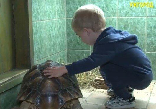 """В Ужгороді оселилася черепаха-гігант з довжелезним """"манікюром"""" - найбільша у світі"""