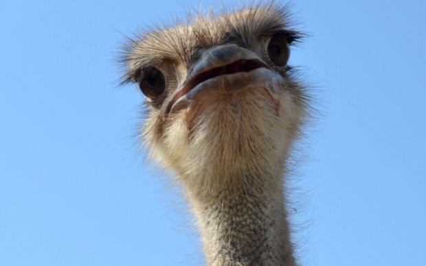 В российском зоопарке страус испугался посетителей и умер