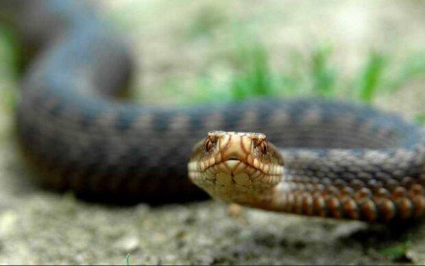 Скрин, видео YouTube змея