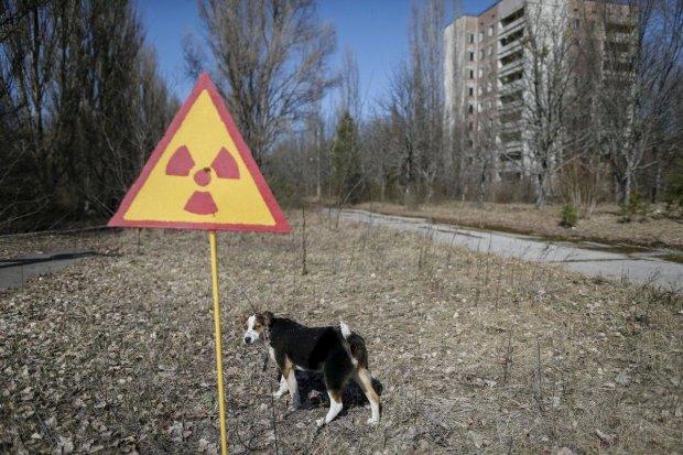 """Туристы попали в громкий скандал в зоне отчуждения: пришлось вмешиваться создателю сериала """"Чернобыль"""""""