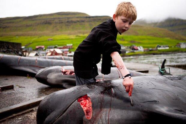 """Фото: ГО """"Врятуємо дельфінів"""""""