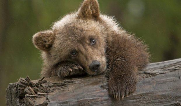 Житель Тбилиси вернул убежавшего от наводнения медвежонка в зоопарк