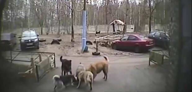 """Дніпрянку мало не розірвала зграя голодних собак: """"Думала, це кінець"""""""