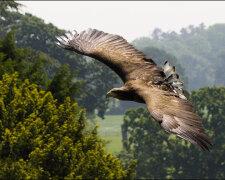 белый орлан, иллюстративное фото