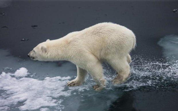 Переляк ведмедя обійшовся гіду в кругленьку суму