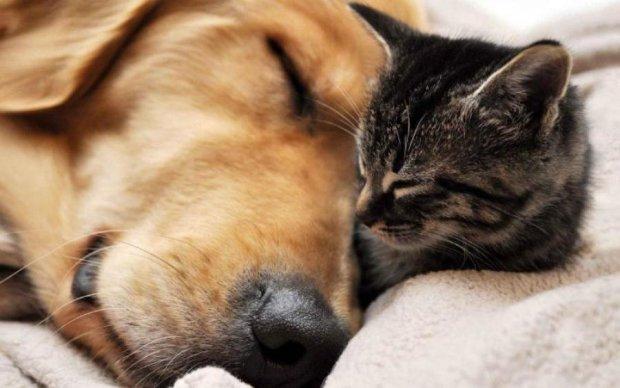 Кошка или собака? Зоологи узнали, кто умнее
