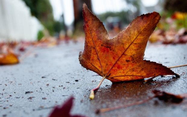 Грози і перші заморозки: до чого готуватися українцям цієї осені