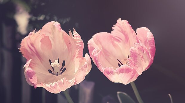 квіти, фото pixabay
