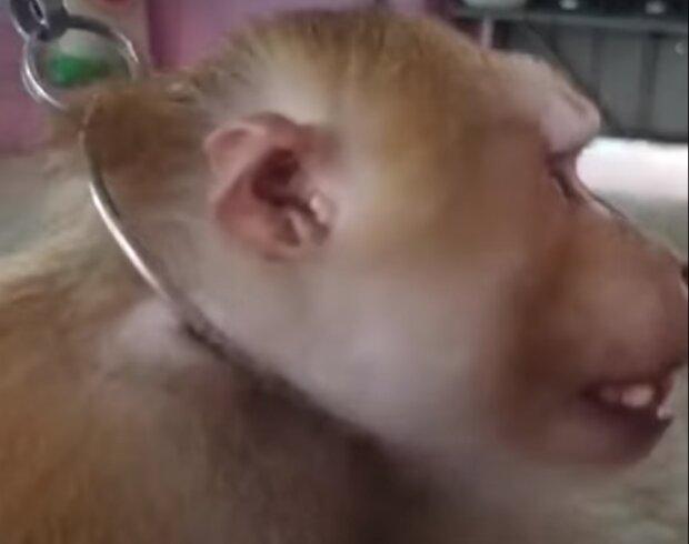 Издевательство над обезьяной, скриншот видео