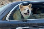 Собака Фото: ФБ / Наталка Волосацкая